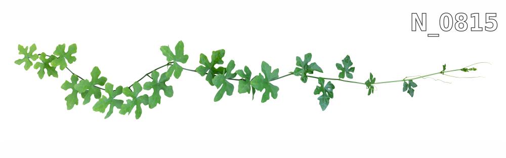 Kolekcja roślinna GREENERY